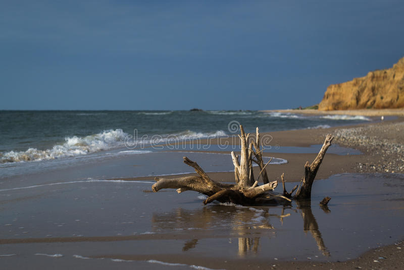 Driftwood on sea beach. Waves on background. Dark stormy sky stock photo