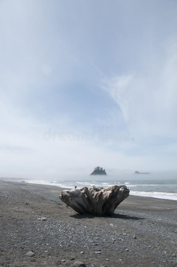 Misty Mountain Island with Driftwood at Rialto Beach. Olympic National Park, WA. Driftwood on the seashore at Rialto Beach with misty mountain islands. Olympic royalty free stock photography
