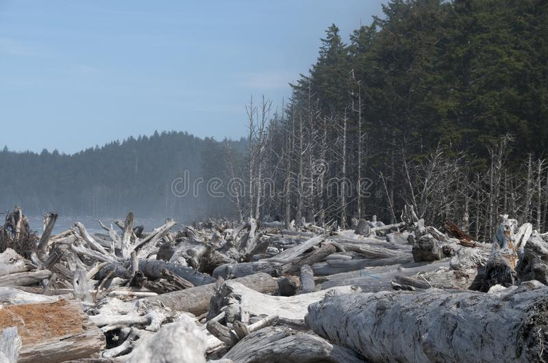 Driftwood on the seashore at Rialto Beach. Olympic National Park, WA. Shington state, West Coast of Olympic Peninsula. Driftwood washed ashore by the Pacific stock image