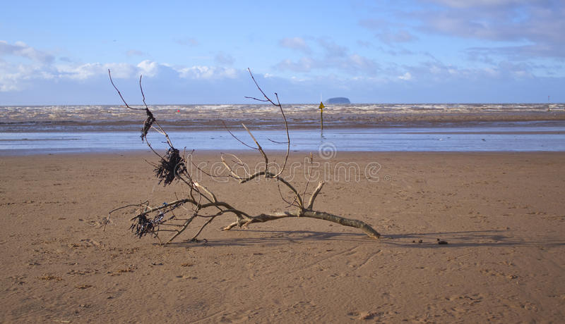 Driftwood and seaweed on a beach stock photo