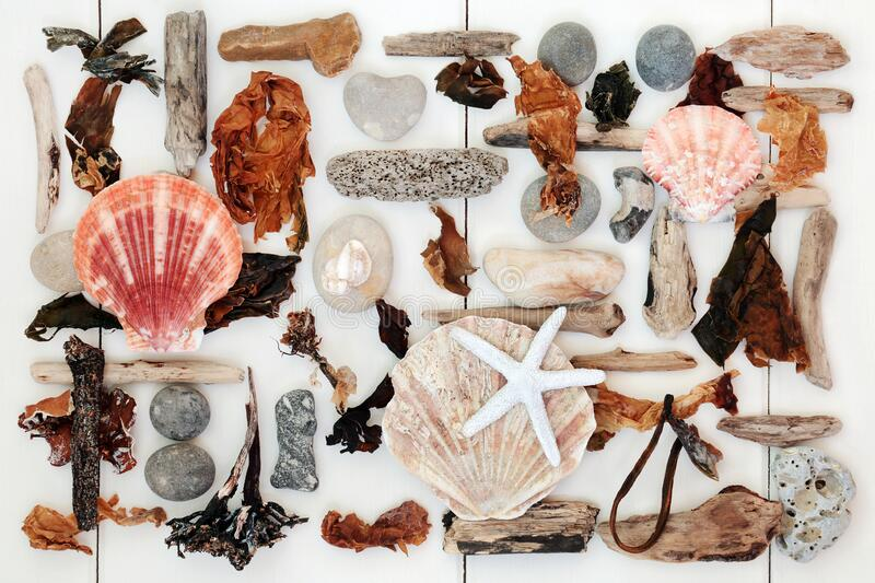 Driftwood Shell and Seaweed Abstract stock photography