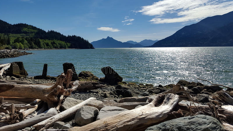 Driftwood shore royalty free stock photography