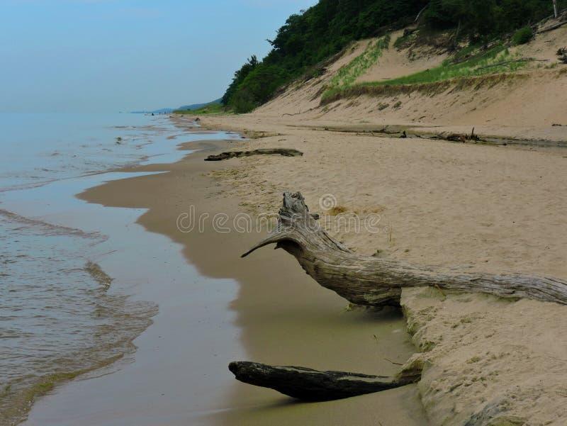 driftwood royalty-vrije stock foto's