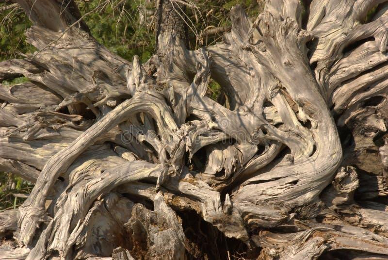 Driftwood Stump Texture Royalty Free Stock Photos