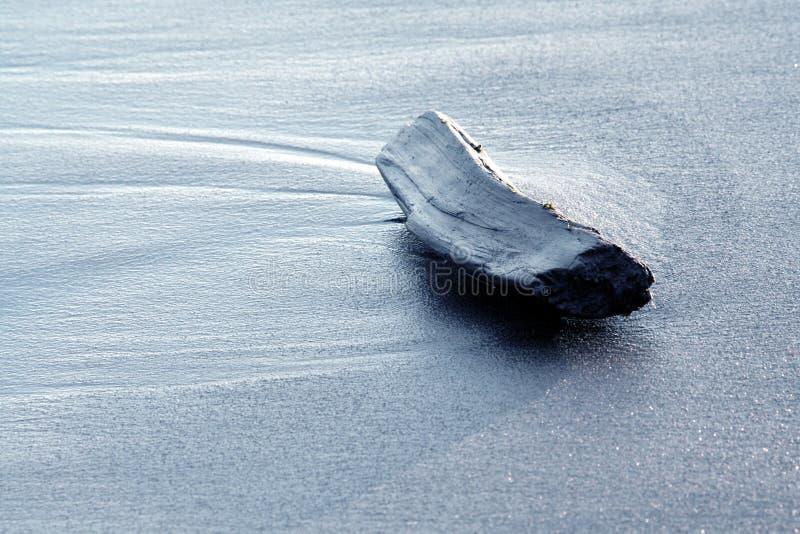 Driftwood su una spiaggia fotografia stock