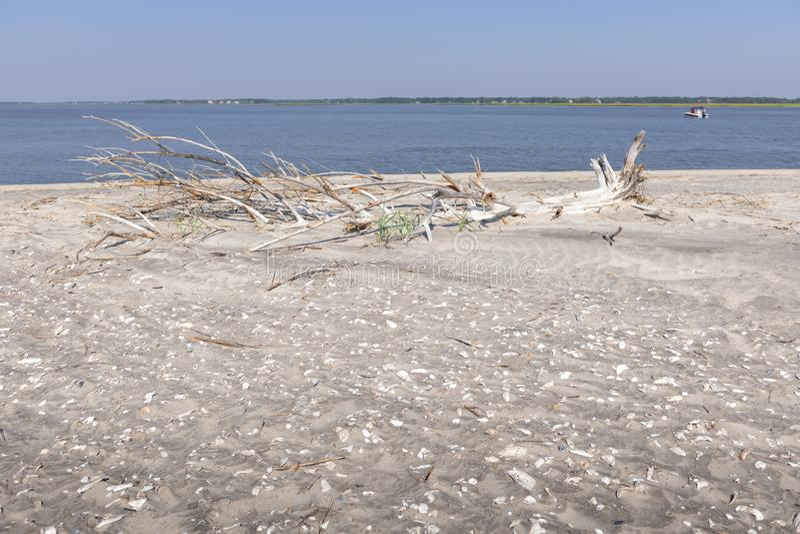 Driftwood su una spiaggia immagine stock libera da diritti