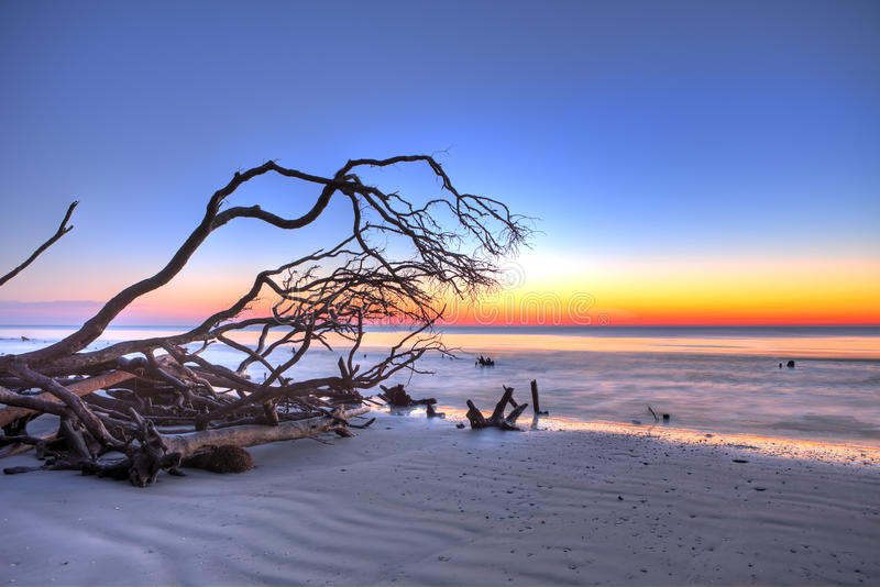 Driftwood and sunrise hdr royalty free stock photos