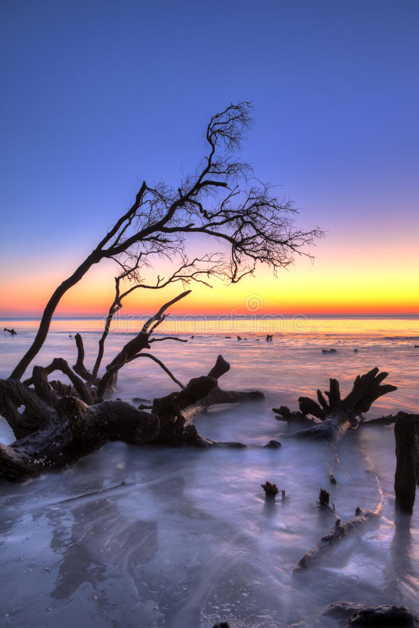 Download Driftwood and sunrise hdr stock image. Image of beautiful - 12624141