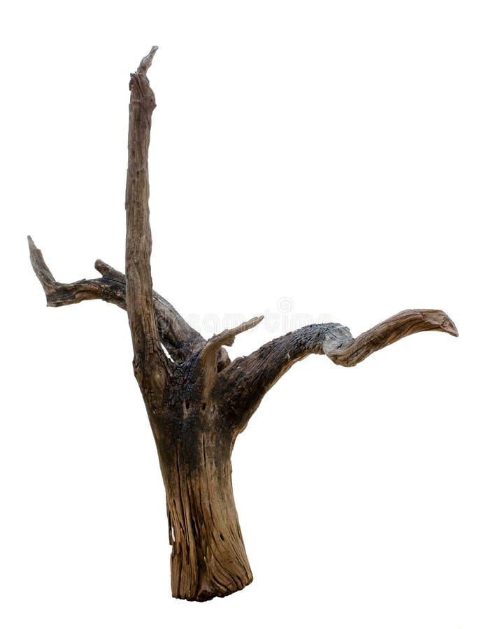 Driftwood tree stump. Isolated on white background royalty free stock photo