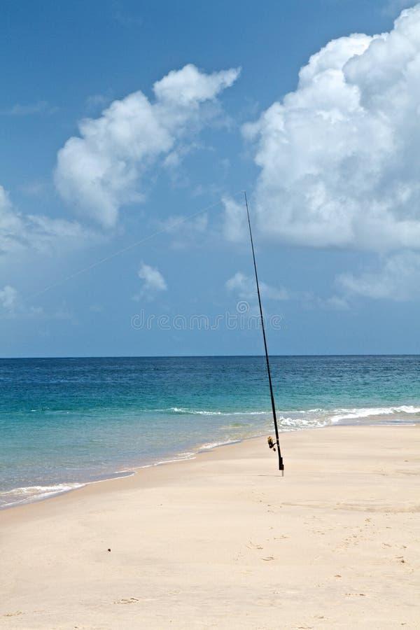 Driftwood on tropical beach