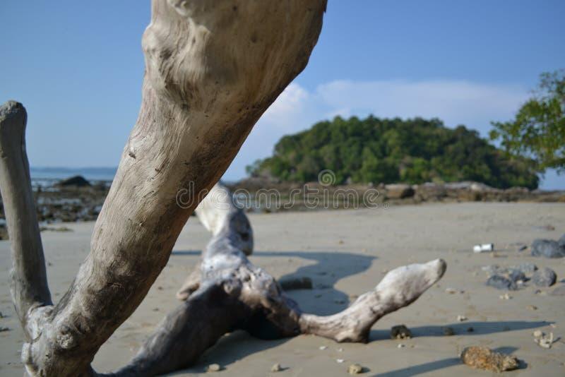 Driftwood washed ashore stock photography