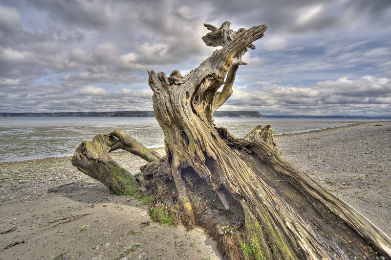 Download Driftwood On Whidbey Island, Washington Stock Image - Image: 4873539