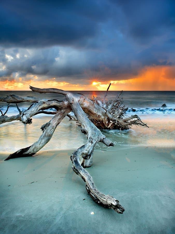 driftwoodsunburst fotografering för bildbyråer