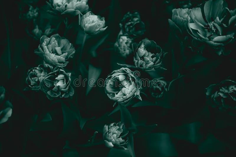Drijfbedden van bloesende tulpen royalty-vrije stock fotografie