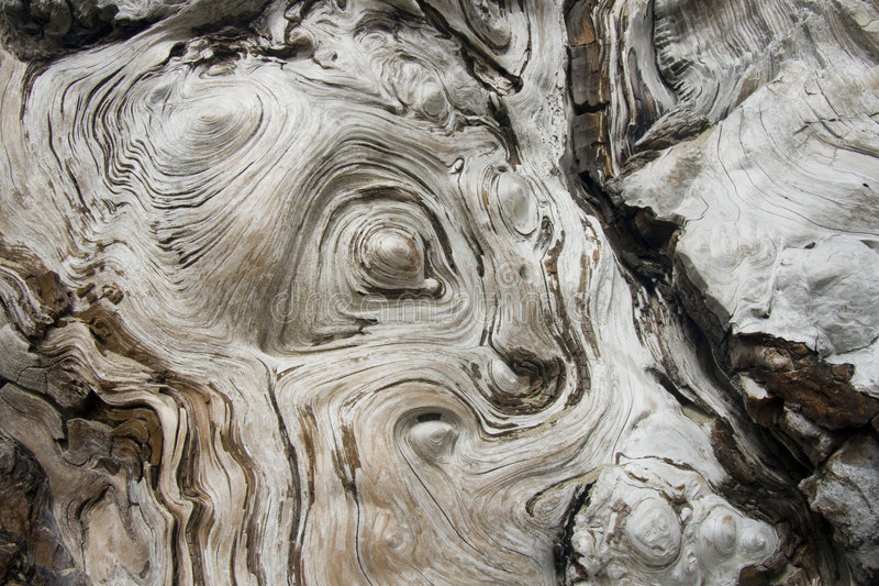 Drijfhout stock afbeeldingen