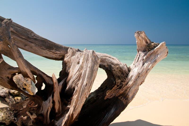 Drijfhout bij het strand stock afbeelding