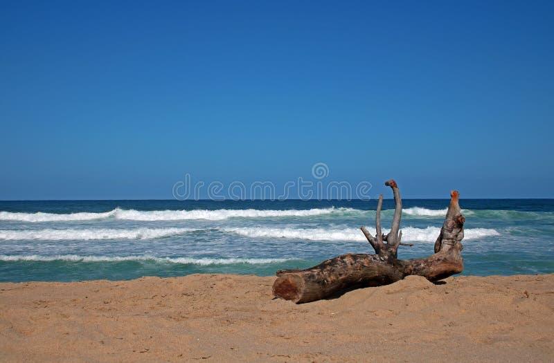 Drijfhout die op het strand liggen royalty-vrije stock afbeeldingen
