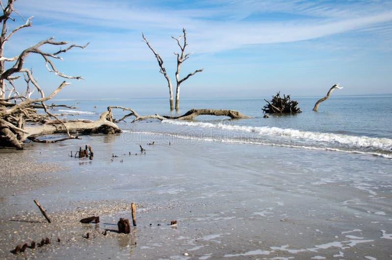 Drijfhout en dode bomen op het strand bij het Park van de Staat van het de Jachteiland Kalm water at low tide royalty-vrije stock afbeelding