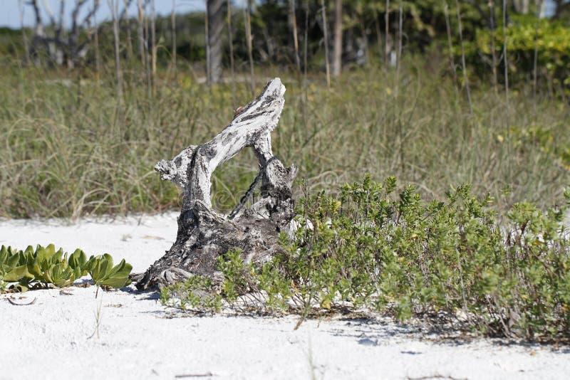 Drijfhout en installaties bij de rand van een strand met gras op de achtergrond wordt gevonden die royalty-vrije stock foto