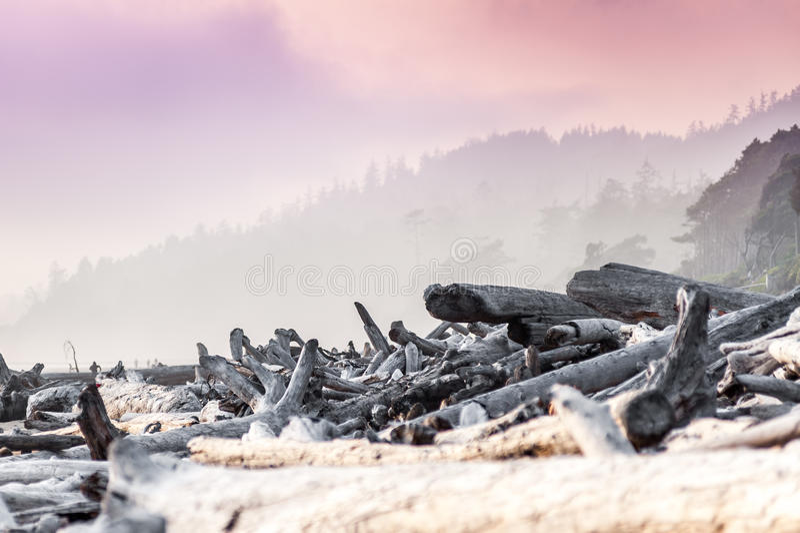 Drijfhout langs Kalaloch-Strand stock afbeeldingen