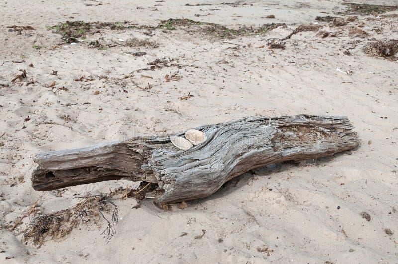 Drijfhout met zandig strand royalty-vrije stock afbeeldingen