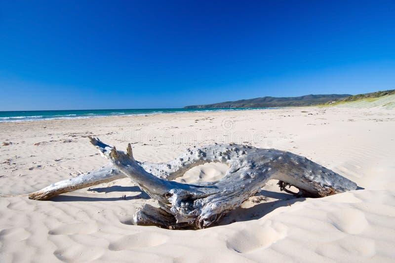 Drijfhout op Australisch strand royalty-vrije stock foto