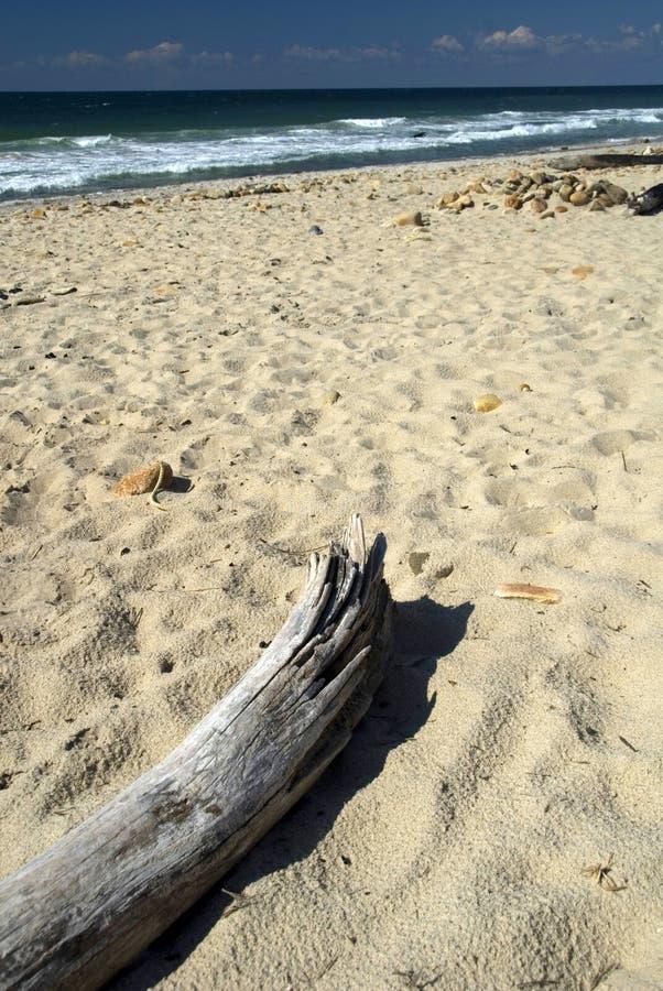 Drijfhout op het strand stock foto