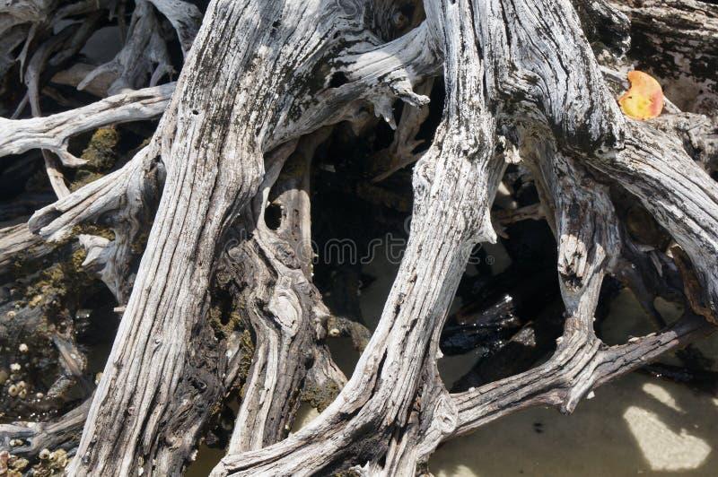 Drijfhout op het strand royalty-vrije stock afbeeldingen