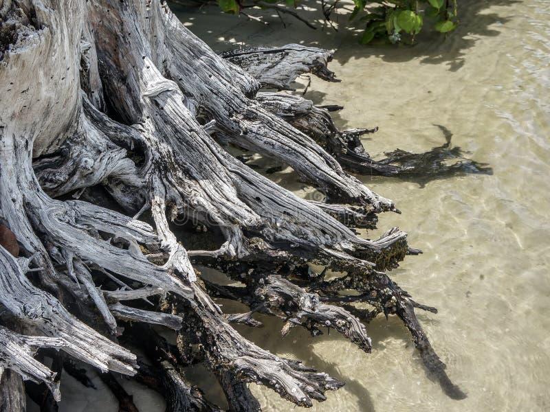 Drijfhout op het strand stock afbeelding