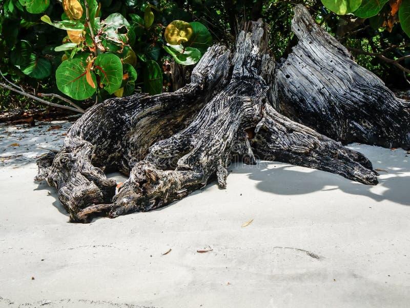 Drijfhout op het strand stock foto's
