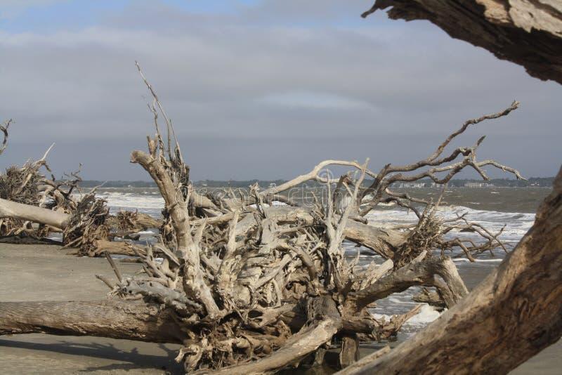 Drijfhout op het strand bij Jeklly-Eiland stock afbeeldingen