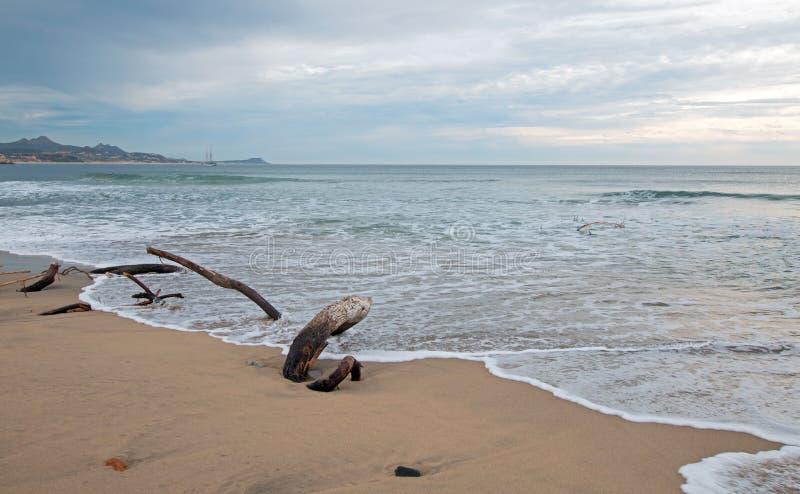 Drijfhout op het strand in San Jose Del Cabo dichtbij Cabo San Lucas in Baja Californië Mexico stock foto's