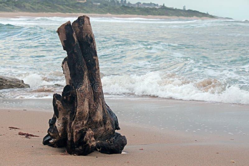 Drijfhout op het zand stock foto's
