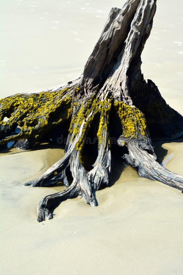 Drijfhout op kust stock foto's