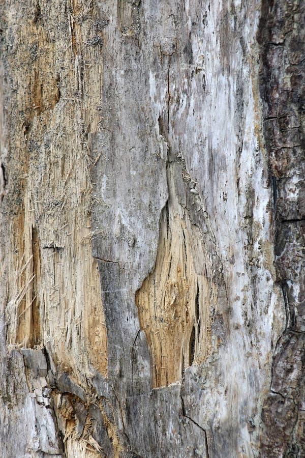 Drijfhout op kust die wat schors en hout binnen tonen stock foto