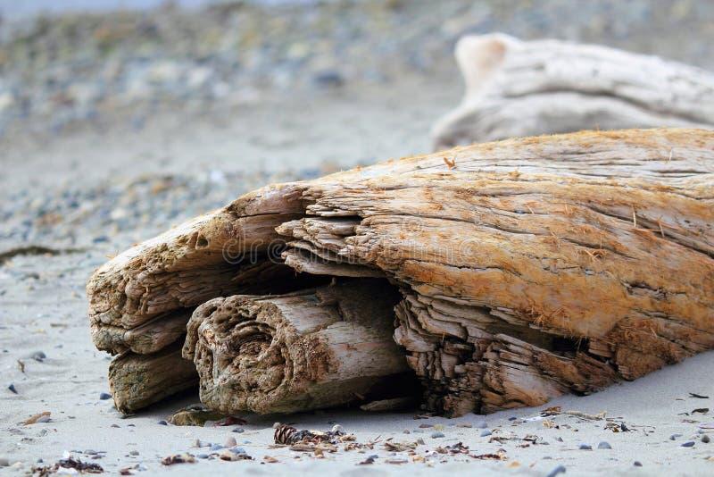 Drijfhout op Strand, Geestig Lagune Regionaal Park, het Eiland van Vancouver stock foto
