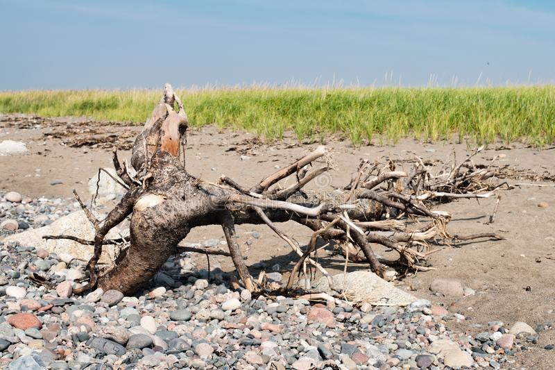 Drijfhout op Strand met rotsen en overzees gras stock foto's