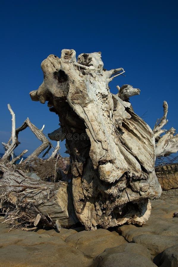 Drijfhout op verlaten eiland royalty-vrije stock foto's