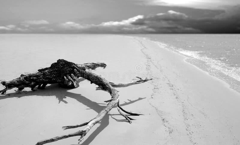 Drijfhout op Verlaten Strand stock afbeeldingen