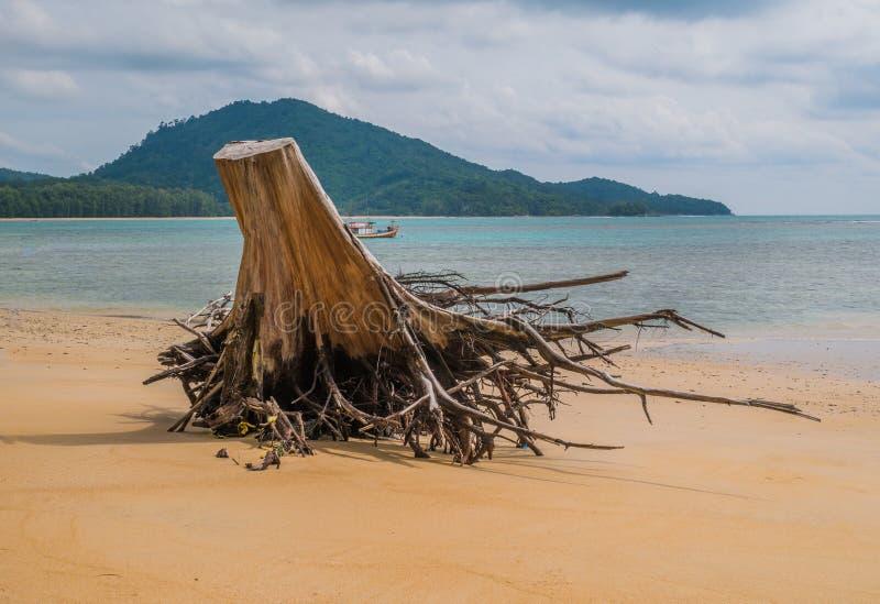 Drijfhout op zandig strand in Nai Yang Beach, de Nationale Pa van Sirinath royalty-vrije stock afbeeldingen