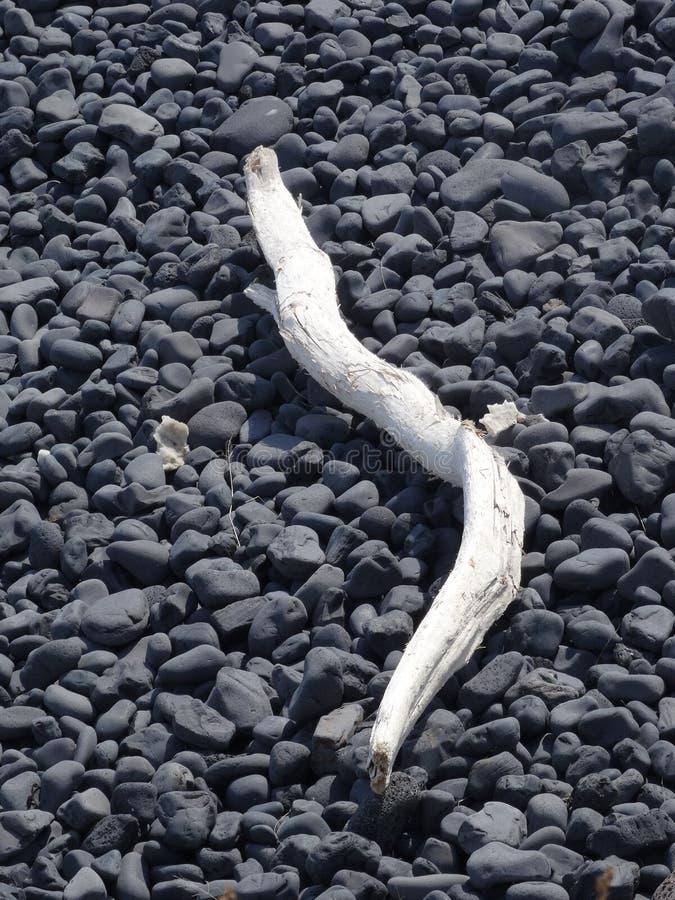 Drijfhout op zwart lavastrand stock foto's