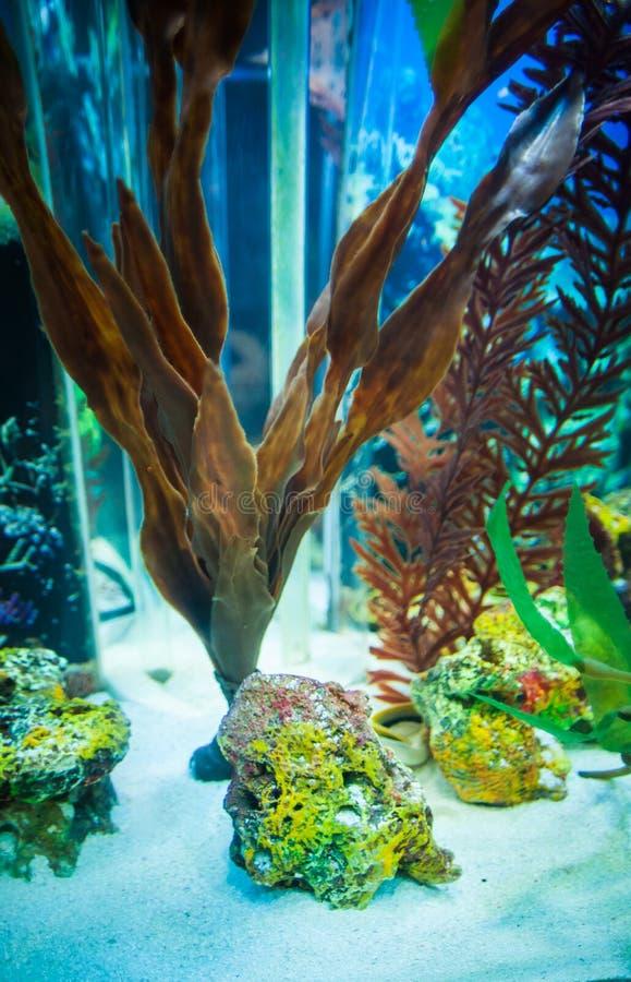 Drijfhoutaquarium en aquatisch onkruid in onderwater stock fotografie