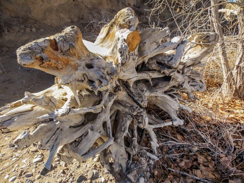 Drijfhoutstomp aan wal op het Strand stock afbeeldingen