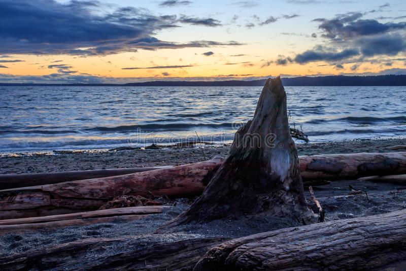 Drijfhoutstomp onder oranje zonsondergang stock fotografie