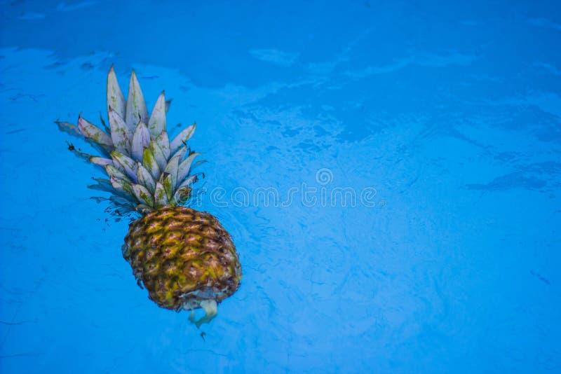 Drijvende ananas stock foto's