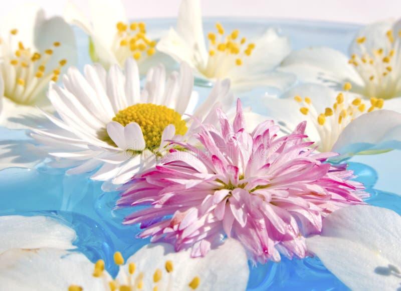 Drijvende Bloemen stock afbeeldingen