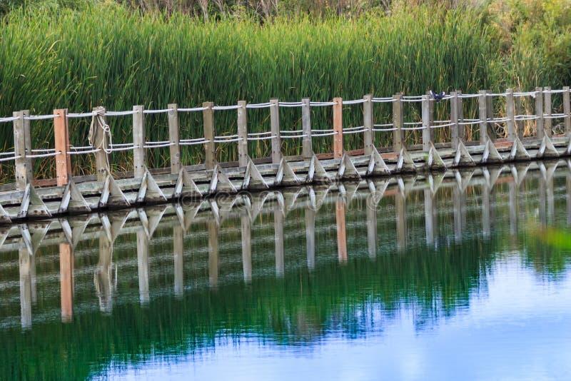 Drijvende promenade tegen groene die cattails wordt weerspiegeld op nog wat stock foto's