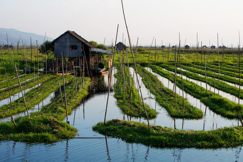 Drijvende tuinen op Inle-Meer, Myanmar stock foto
