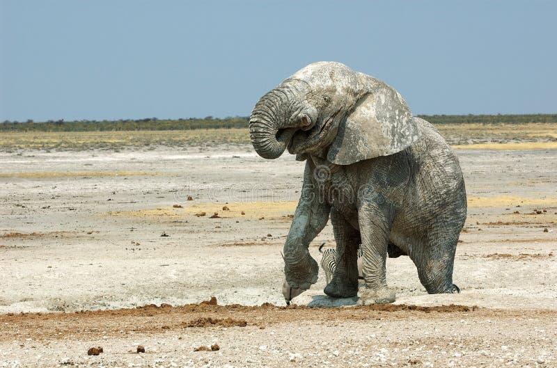 Download Drinking elephant stock photo. Image of head, etosha, games - 1010346
