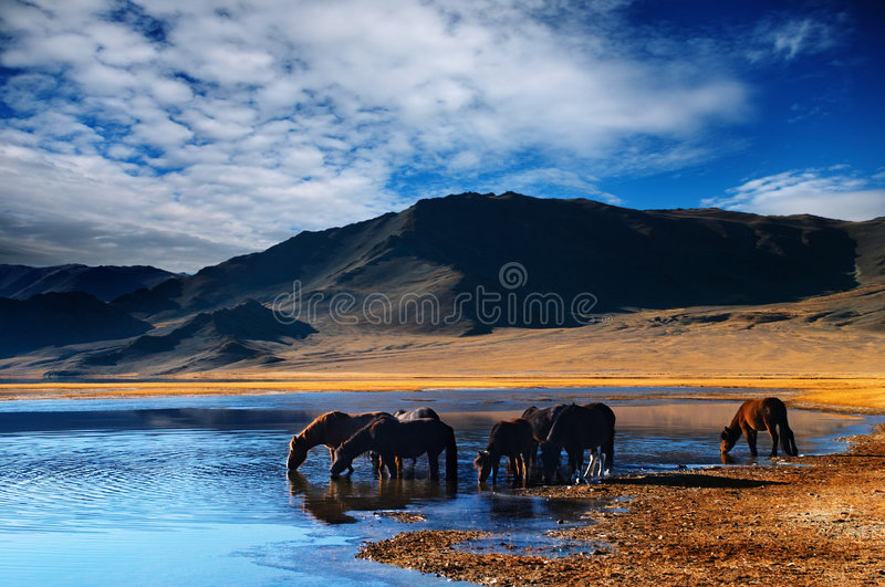 Drinking horses. Mountain landscape with drinking horses stock photo